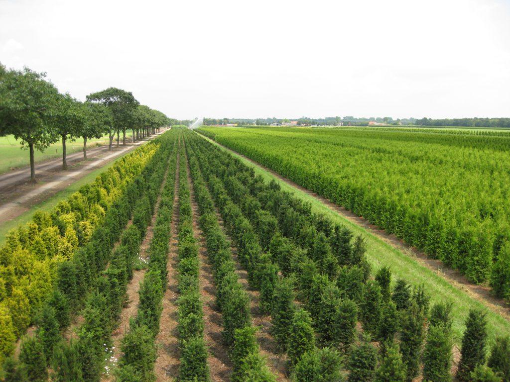 Boomkwekerij mark van Gompel duurzaam kweken