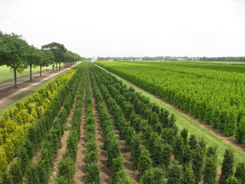 Boomkwekerij mark van Gompel duurzaam kweken Brabant